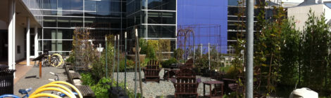 Photo of Google Moutain View campus garden