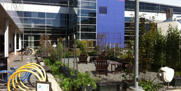 Photo of Google Moutain View campus garden